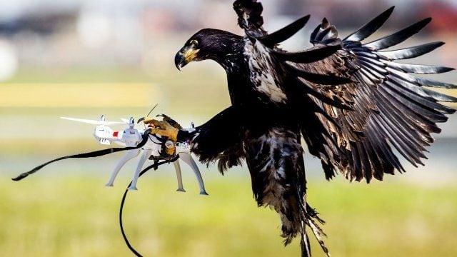orly na lov dronov 01