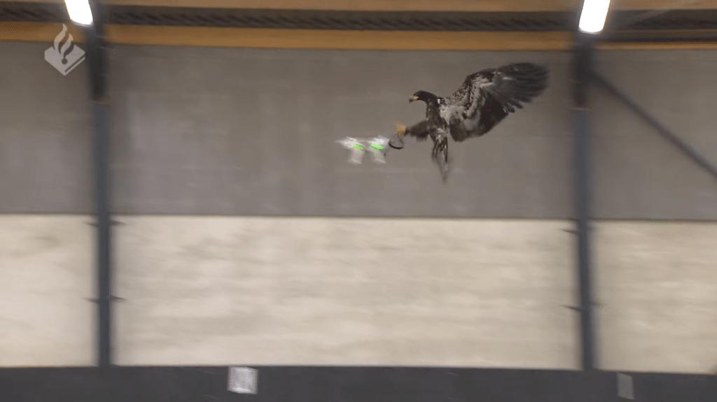 orly na lov dronov