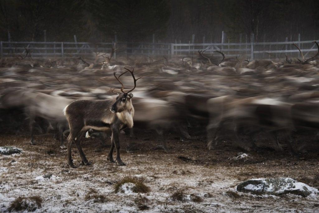 príbehy Joela Marklunda - soby