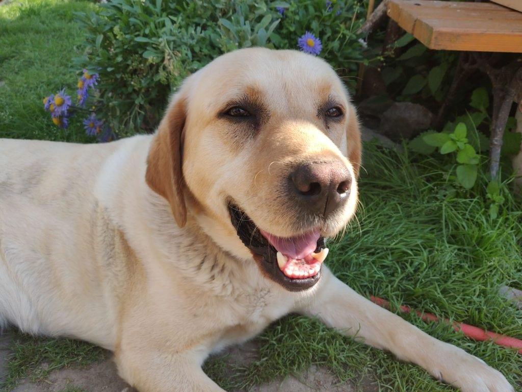 Fotografia psa s OnePlus 6 s detailami a neutrálnymi farbami, ale aj stopami po softvérovom postprocesse.