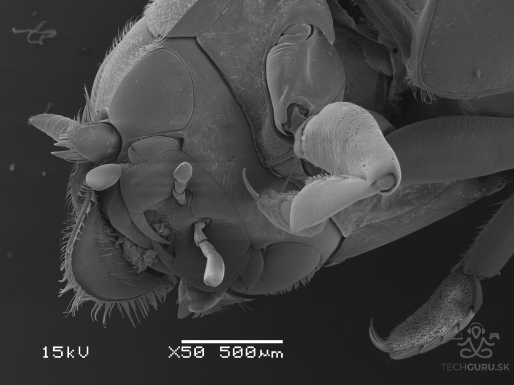 Elektronová mikroskopie 05